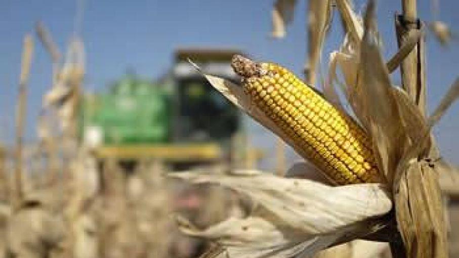 """Exportaciones: El Gobierno levantó el cepo al maíz a cambio de un """"monitoreo"""" con el sector privado"""