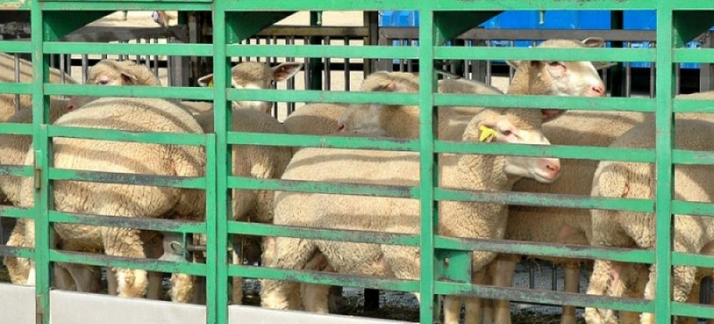 Senasa: Ya está disponible en Chubut el Documento Único para el traslado de animales