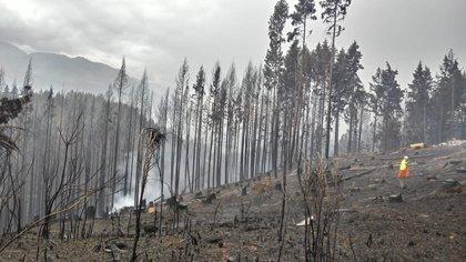 """Incendios: """"Bajaron las partidas y crearon un impuesto"""", cuestionó Menna"""