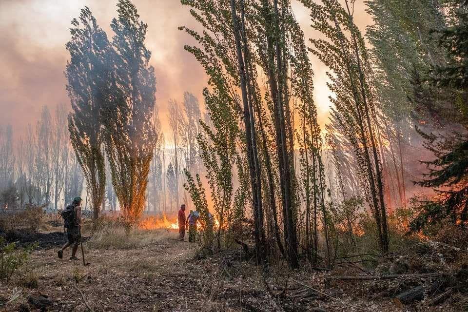 Incendios y tierras: Diputados piden información sobre transferencias anunciadas por el Ejecutivo