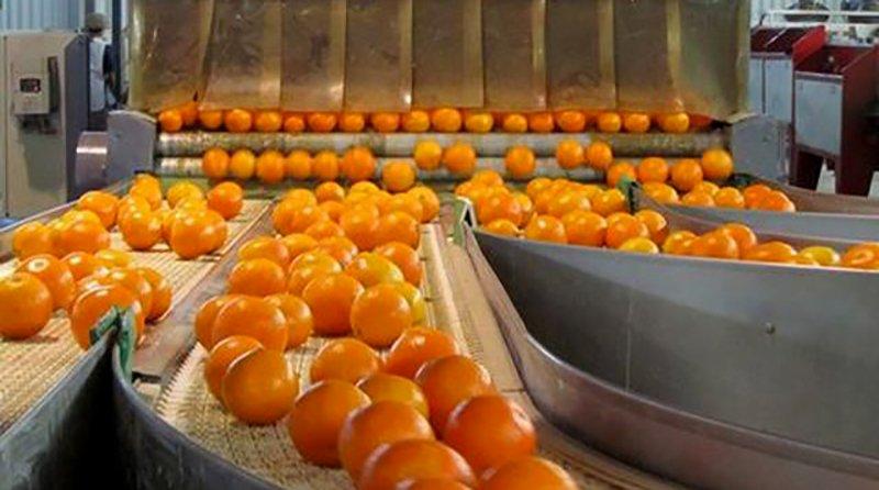 Cítricos: La Unión Europea reabrió el mercado a las exportaciones argentinas