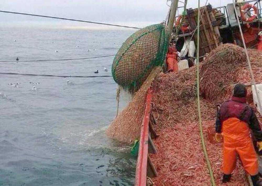Langostinos: Las exportaciones aumentaron un 15% en el primer trimestre de 2021