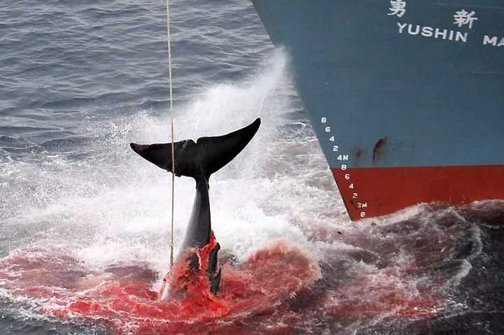 Por qué hoy es el Día Internacional de la Lucha contra la Pesca Ilegal