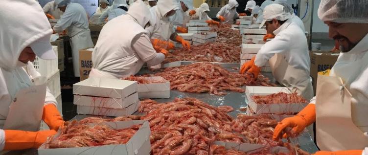 Pesca: Censarán en Chubut las plantas procesadoras y la capacidad de empleo