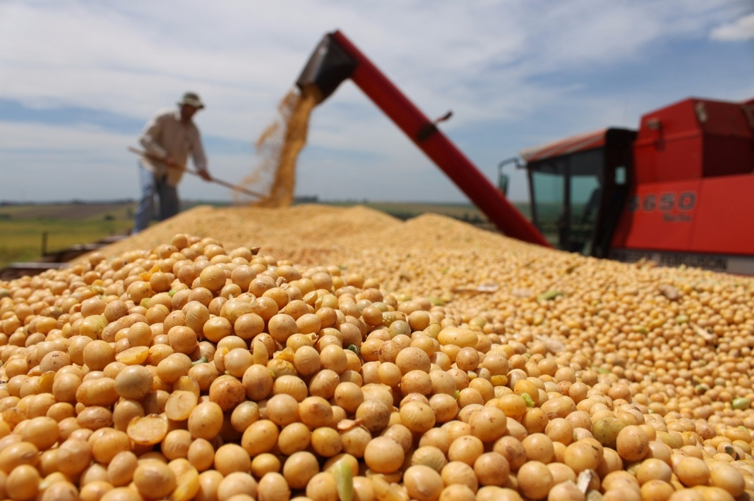 Agro: Las exportaciones de maíz y derivados de soja cayeron 10% interanual en junio