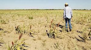 El 78% de los productores tuvo problemas por la sequía en sus campos