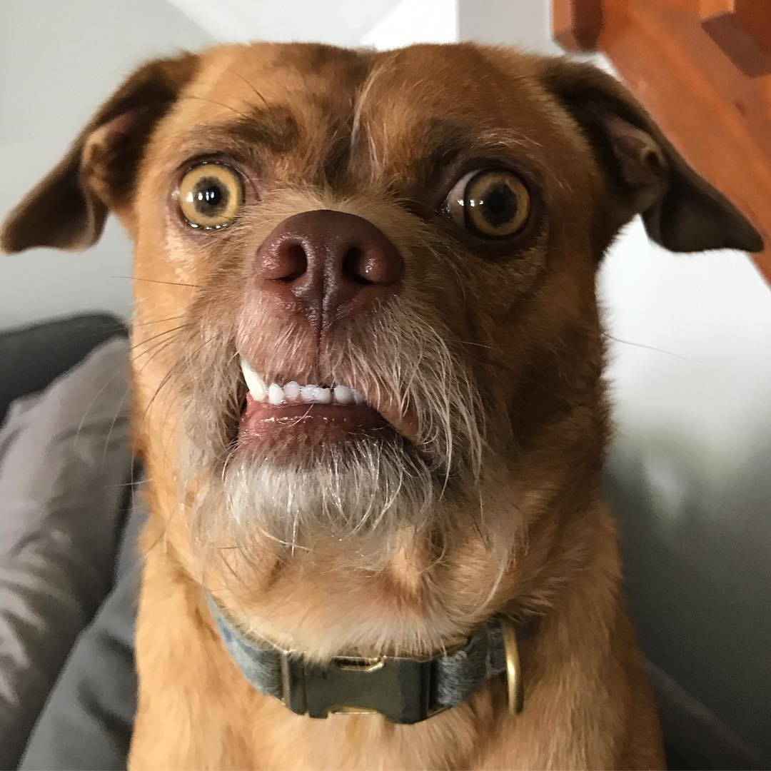 La primera PASO a cara de perro