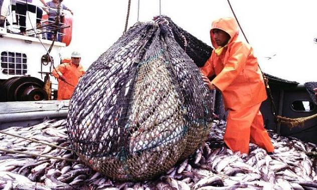 Pesca: Récord de exportaciones por más de US$ 1.000 M en los primeros siete meses