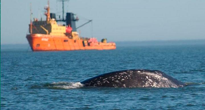 Pesca: Elevaron impugnación a estudios sísmicos de exploración petrolera en el mar