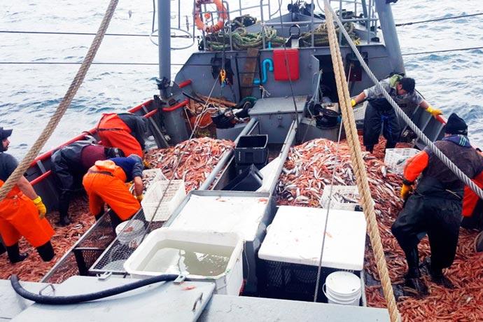 Análisis: Pobreza en Argentina con descarte de pescados al mar