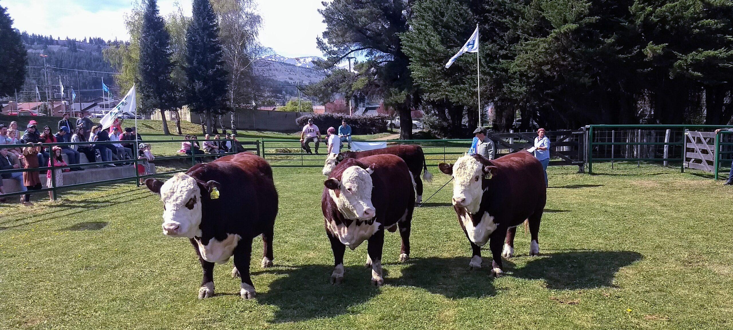 44° Exposición Bovina en Esquel: Fuerte defensa del Gobierno Provincial sobre la propiedad privada
